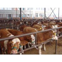 供应牛场价格 牛场养殖技术