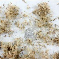 牧草种子正宗野芒草种子莽草种子龙胆白薇能源作物药材中国芒巨芒