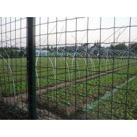 养鸡荷兰网,散养鸡网,围鸡网,养鸡铁丝网围栏规格