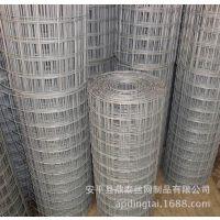 厂家直销热镀锌电焊网,冷镀锌电焊网,禽畜养殖网,烧烤网