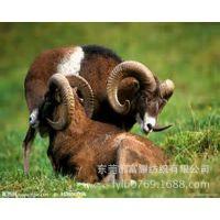 03663#山羊皮压纹,  马毛印花豹点斑纹石头纹园点素色马毛皮面料