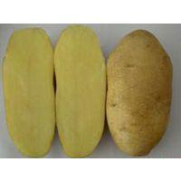 供应大量供应马铃薯 内蒙多伦特产 种植基地