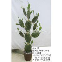 供应仿真热带植物盆栽。仙人掌仙人球仙人刺仿真出售