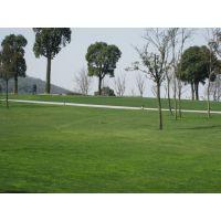 上海园林公司提供花园设计 庭院设计 花园养护 别墅设计