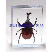 昆虫教学标本,人工琥珀教学标本