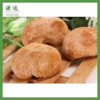 新货上市 250g特价野生菌 福建特产干制猴头菇野生菌