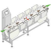 供应DCW-多级分选称 鱼虾自动分选秤 鸡腿海参自动分选检测秤 工厂定制