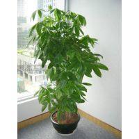 供应清绘绿植租赁、花卉租摆与销售(室内中小型植物 免费绿植养护)