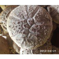 平泉繁荣食用菌合作社供应香菇