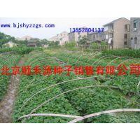 红薯种子种苗顺禾源培育基地一级种子中心