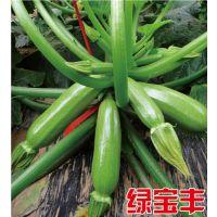 """供应 翠绿色 越冬耐寒抗病西葫芦种子—""""绿宝丰"""""""