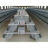 供应鸡笼价格,四门蛋鸡笼多少钱一组