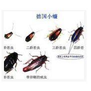 是什么原因导致蟑螂滋生【灭蟑螂的方法】厦门灵狐