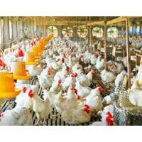 养殖场鸡粪处理、猪粪处理、牛粪处理怎么办? 沃宝养殖粪便处理技术来解决