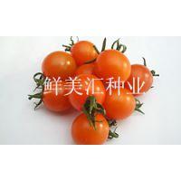 橙色水果番茄种子——甜橙