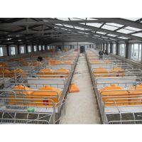 多腿式母猪产床亚富自动化养猪设备上料系统