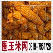 玉米圈网—圈玉米网大量现货批发