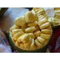 海南木菠萝,菠萝蜜新鲜水果,大树木菠萝蜜,鲜果