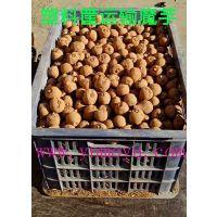 花魔芋种子 魔芋种子价格 40斤20~100克全国包邮