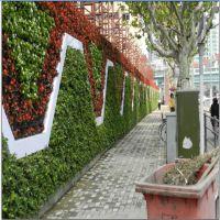 新雯设计仿真植物墙 艺术仿真植物墙