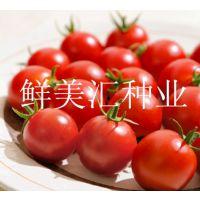 水果樱桃番茄种子——红双喜
