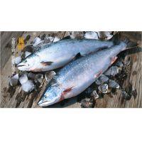 枫林有机食品:生食白金级挪威三文鱼500g