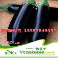供应长茄子种子 品种齐全都是当年新采 质量保证