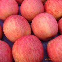 陕西苹果基地,大荔苹果价格,陕西红富士苹果基地,大荔红富士苹果价格