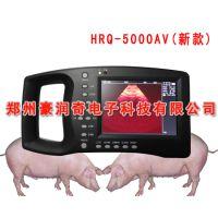 猪用B超图像怎么看,猪怀孕B超图像