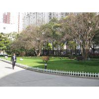 浦东新区川沙镇植物租赁,花卉租赁,植物种植,花卉种植