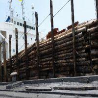 荣丰木业提供的建筑方料特色是什么 广西方木