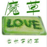 魔草 小植物盆景/迷你小花小草写字草植物草坪盆栽室内F655
