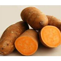 供应大量地瓜【红薯】
