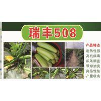 高抗病毒病翠绿色西葫芦种子——瑞丰508