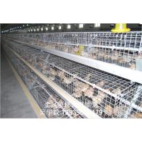 供应金凤家禽养殖设备蛋鸡笼育雏鸡笼厂家直销
