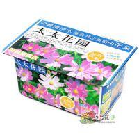 太太花园【波斯菊】DIY种植迷你精装植物 家庭小园艺 礼品工艺