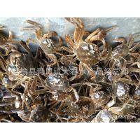 供应(60只~70只)/斤长江系大闸蟹蟹苗 中华绒螯蟹蟹苗 毛蟹蟹苗