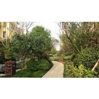 花卉植物种植,租赁,上海浦东张江