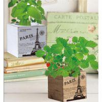 秘密小花园 复古田园栽培 桌面防辐射绿色植物 迷你园艺栽培 盆栽