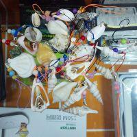 海螺挂件 手机小装饰  纯天然 海螺海边贝壳 很火的