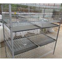 推荐兴博肉鸡养殖笼具,养殖场用肉鸡笼