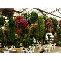 上海植物墙景观设计 上海植物花墙景观工程 上海植物绿化设计 花墙绿化工程
