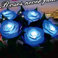 情人节***浪漫的礼物 永不凋谢的蓝色妖姬玫瑰花 红玫瑰混批