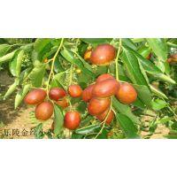 供应2015年乐陵红枣、鲜枣价格报价