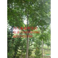 供应栾树、栾树苗木、栾树种子、栾树苗 苗木种子种苗 栾树