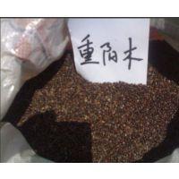 供应批发重阳木种子、重阳木种子价格、三叶树种子、各类林木种子