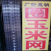 中麦供应2-3mm圈玉米专用网 小钢板网 大丝电焊网 荷兰网