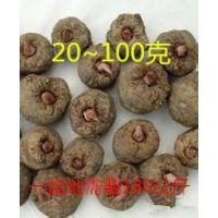 二代魔芋种子、二代魔芋种子批发、二代魔芋种子价格、一年既可以收获