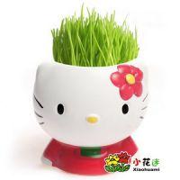 厂家批发青草种植草头娃娃 【KT猫】情侣DIY青青草栽培 微型盆景