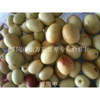 供应鲜大枣批发到山东乐陵红枣产地